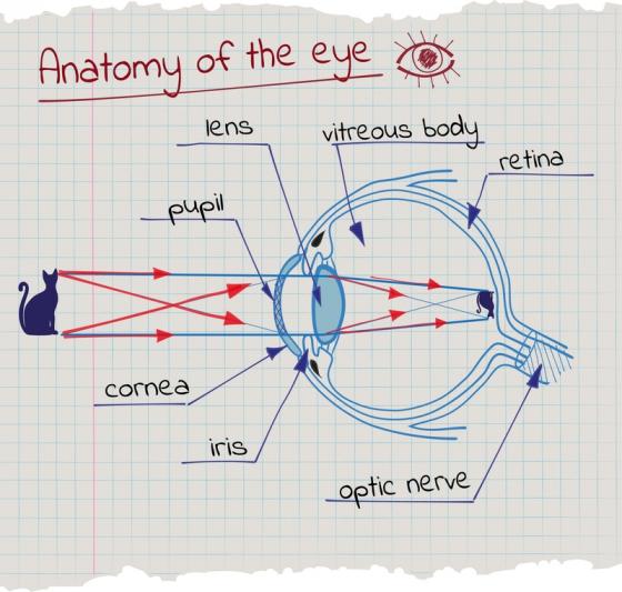recuperarea vederii după îndepărtarea cataractei copil 6 ani vedere 1 5